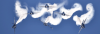 Blue Angels Air Show Schedule 2021